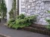 Pflanzen-Buesche-Foto_Textur_B_P6213554