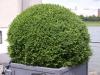 Pflanzen-Buesche-Foto_Textur_B_P6218378