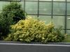 Pflanzen-Buesche-Foto_Textur_B_P6223626