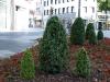 Pflanzen-Buesche-Foto_Textur_B_P6223659