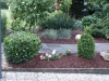 Pflanzen-Buesche-Foto_Textur_B_P6283831
