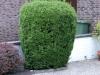 Pflanzen-Buesche-Foto_Textur_B_P6283834