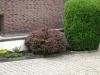 Pflanzen-Buesche-Foto_Textur_B_P6283835