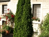 Pflanzen-Buesche-Foto_Textur_B_P6293846