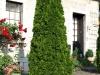 Pflanzen-Buesche-Foto_Textur_B_P6293849