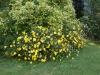 Pflanzen-Buesche-Foto_Textur_B_P6293859