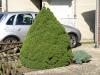 Pflanzen-Buesche-Foto_Textur_B_P6293865