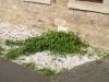 Pflanzen-Buesche-Foto_Textur_B_P6293868