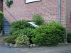 Pflanzen-Buesche-Foto_Textur_B_P7053949