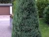 Pflanzen-Buesche-Foto_Textur_B_P7103985
