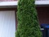 Pflanzen-Buesche-Foto_Textur_B_P7103992