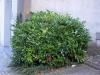 Pflanzen-Buesche-Foto_Textur_B_P7128568