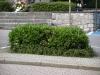 Pflanzen-Buesche-Foto_Textur_B_P7128572