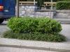 Pflanzen-Buesche-Foto_Textur_B_P7128573