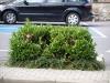 Pflanzen-Buesche-Foto_Textur_B_P7128574