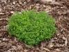 Pflanzen-Buesche-Foto_Textur_B_P7188643