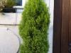 Pflanzen-Buesche-Foto_Textur_B_P8164341