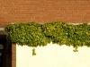 Pflanzen-Buesche-Foto_Textur_B_P9059541