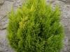 Pflanzen-Buesche-Foto_Textur_B_PA045719
