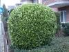 Pflanzen-Buesche-Foto_Textur_B_PC258273