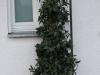 Pflanzen-Buesche-Foto_Textur_B_PC258286