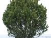Pflanzen-Buesche-Foto_Textur_B_PC258294