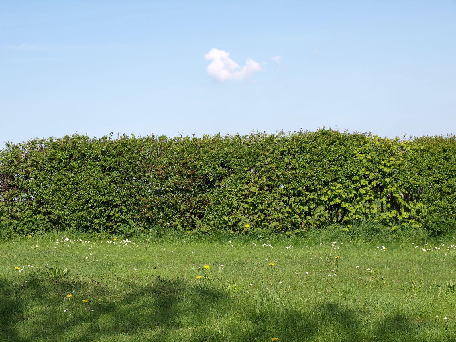 Pflanzen-Hecken-Foto_Textur_B_P5032305