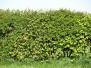 Pflanzen-Hecken