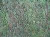 Pflanzen-Hecken-Foto_Textur_B_00879