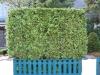 Pflanzen-Hecken-Foto_Textur_B_12380