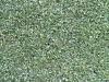 Pflanzen-Hecken-Foto_Textur_B_1655