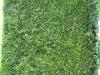 Pflanzen-Hecken-Foto_Textur_B_1659