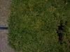 Pflanzen-Hecken-Foto_Textur_B_P3011020