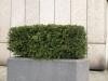 Pflanzen-Hecken-Foto_Textur_B_P4041491