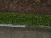 Pflanzen-Hecken-Foto_Textur_B_P4222561