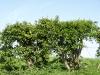 Pflanzen-Hecken-Foto_Textur_B_P5042406