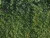Pflanzen-Hecken-Foto_Textur_B_P6233711