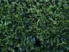 Pflanzen-Hecken-Foto_Textur_B_P6233715