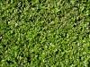 Pflanzen-Hecken-Foto_Textur_B_P6233722