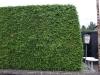 Pflanzen-Hecken-Foto_Textur_B_P8204500