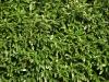 Pflanzen-Hecken-Foto_Textur_B_P9059536