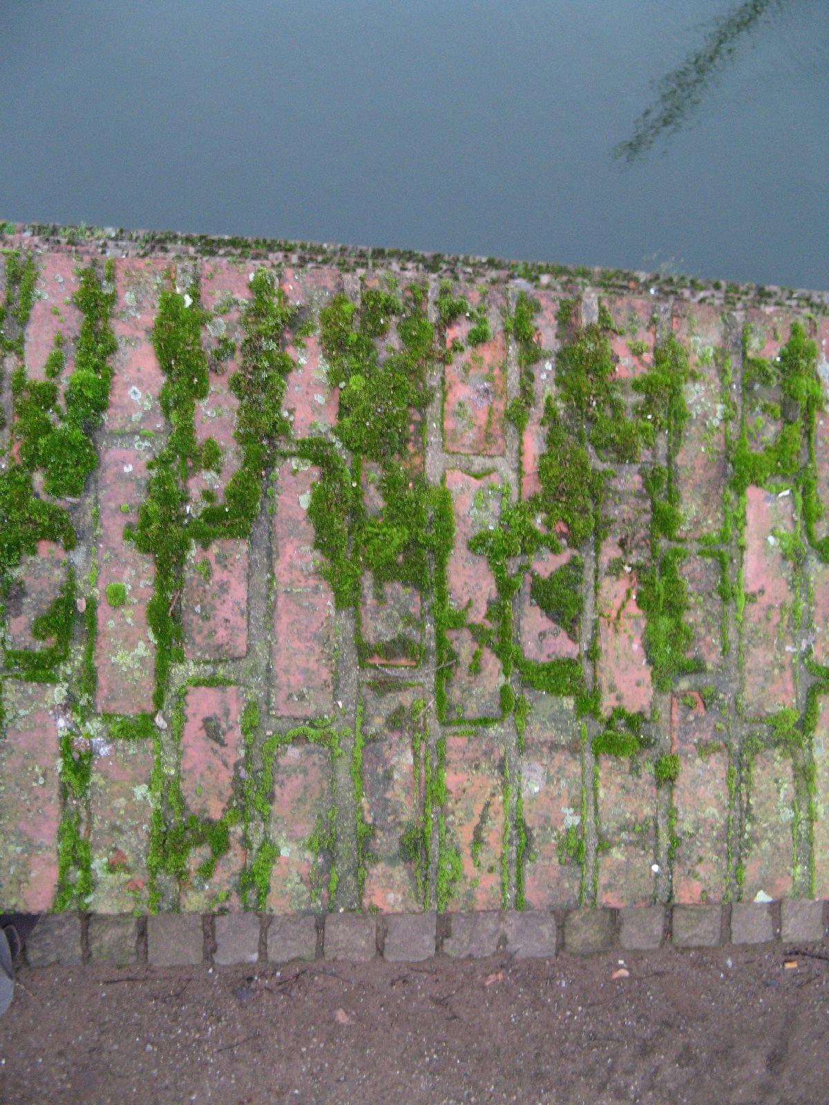 Pflanzen-Verschiedene-Foto_Textur_B_01140