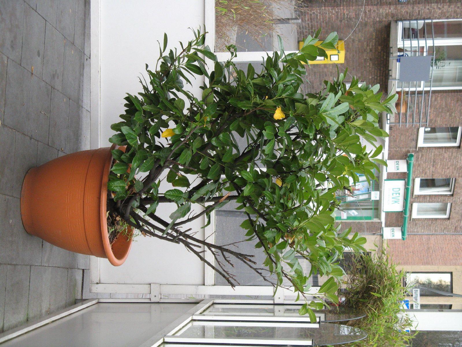 Pflanzen-Verschiedene-Foto_Textur_B_09140