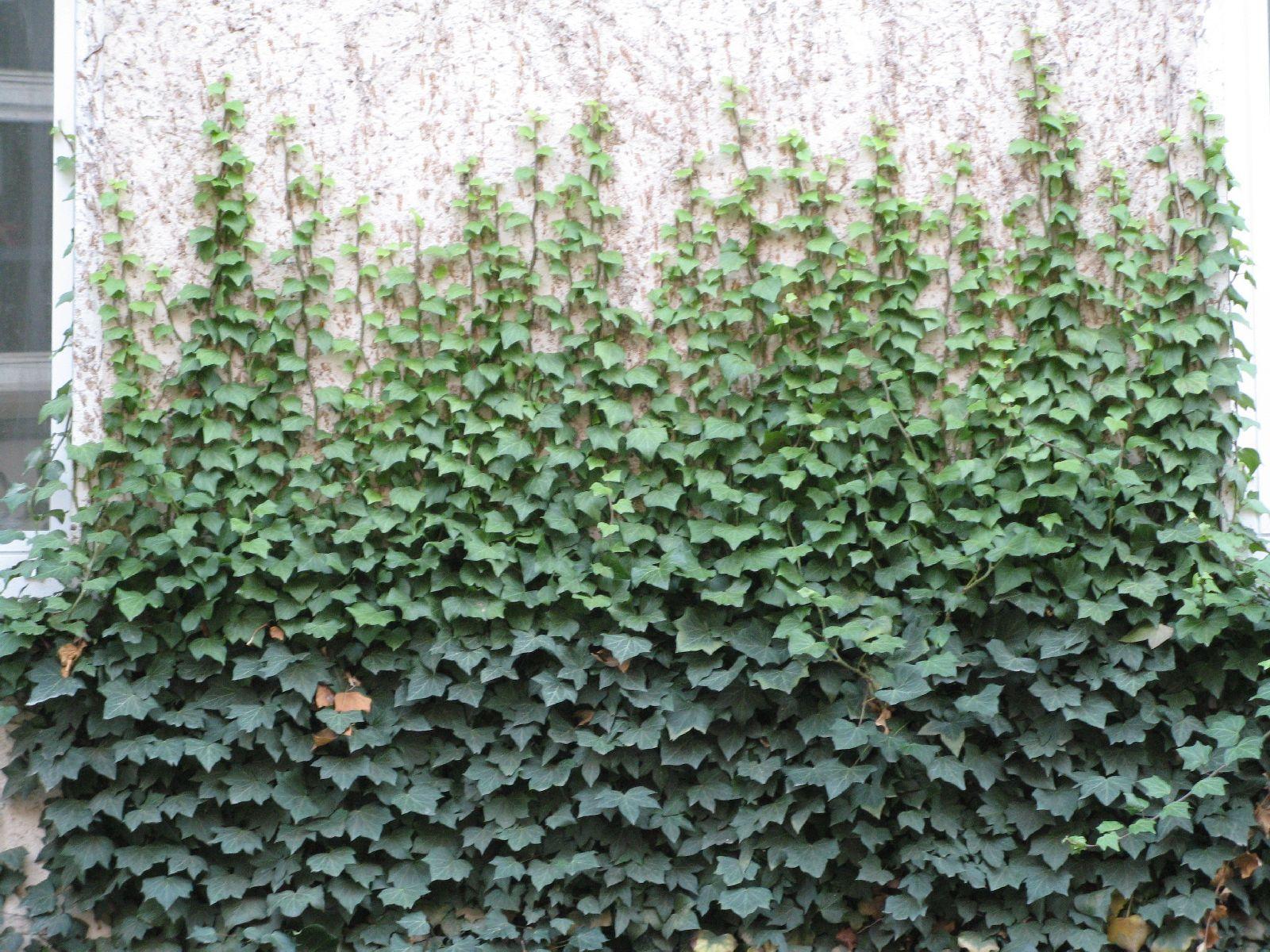 Pflanzen-Verschiedene-Foto_Textur_B_10130