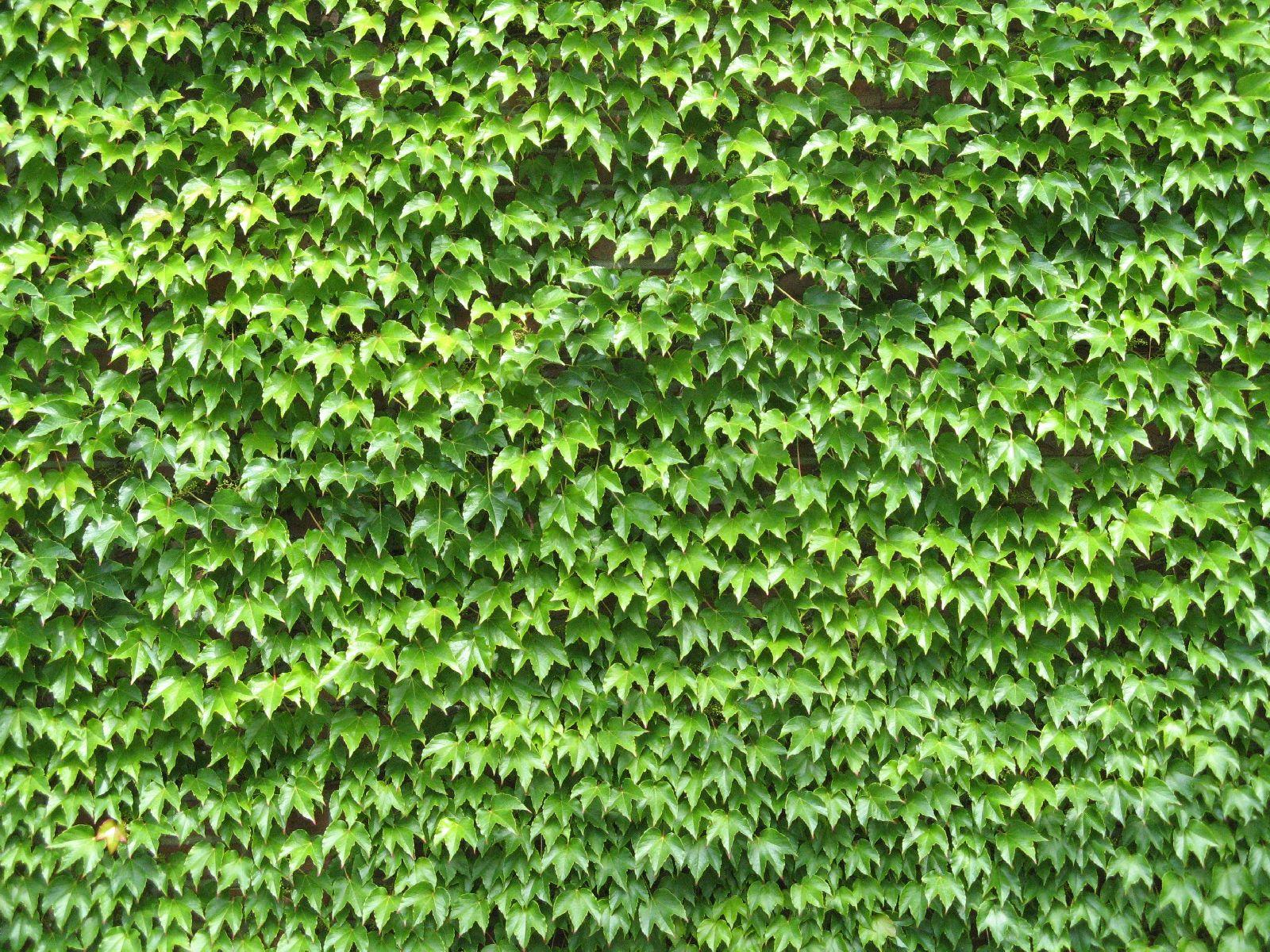 Pflanzen-Verschiedene-Foto_Textur_B_1149