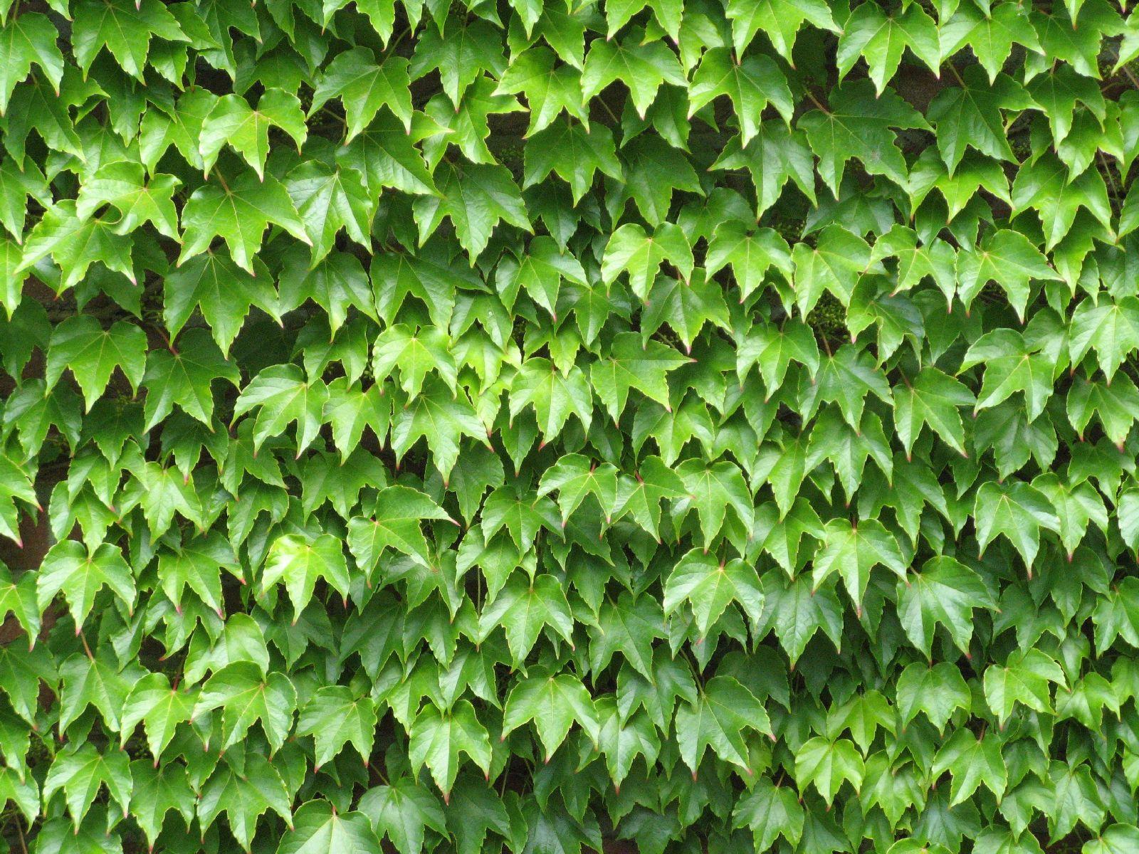 Pflanzen-Verschiedene-Foto_Textur_B_1150