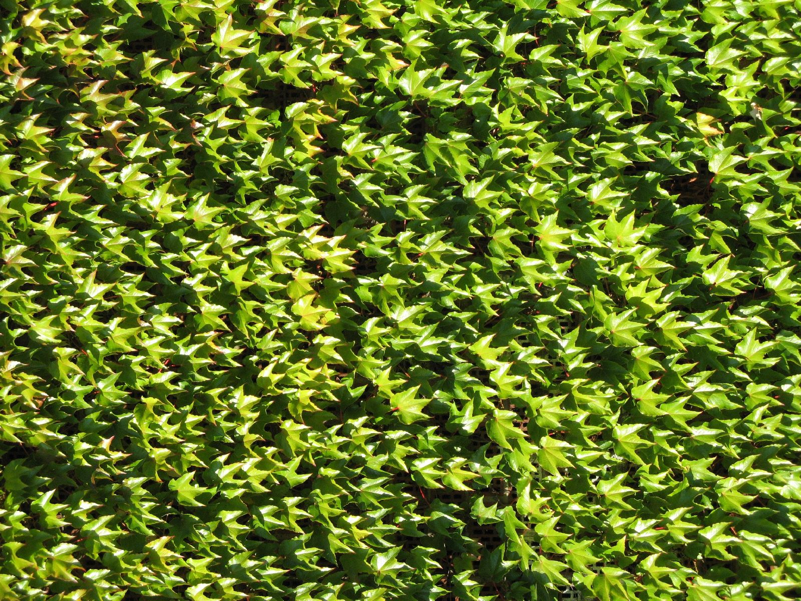 Pflanzen-Verschiedene-Foto_Textur_B_1160