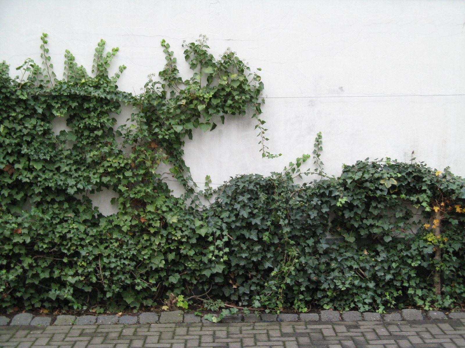 Pflanzen-Verschiedene-Foto_Textur_B_15150