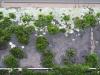 Pflanzen-Verschiedene-Foto_Textur_B_01572