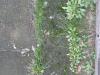Pflanzen-Verschiedene-Foto_Textur_B_02029